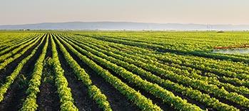 European-agriculture